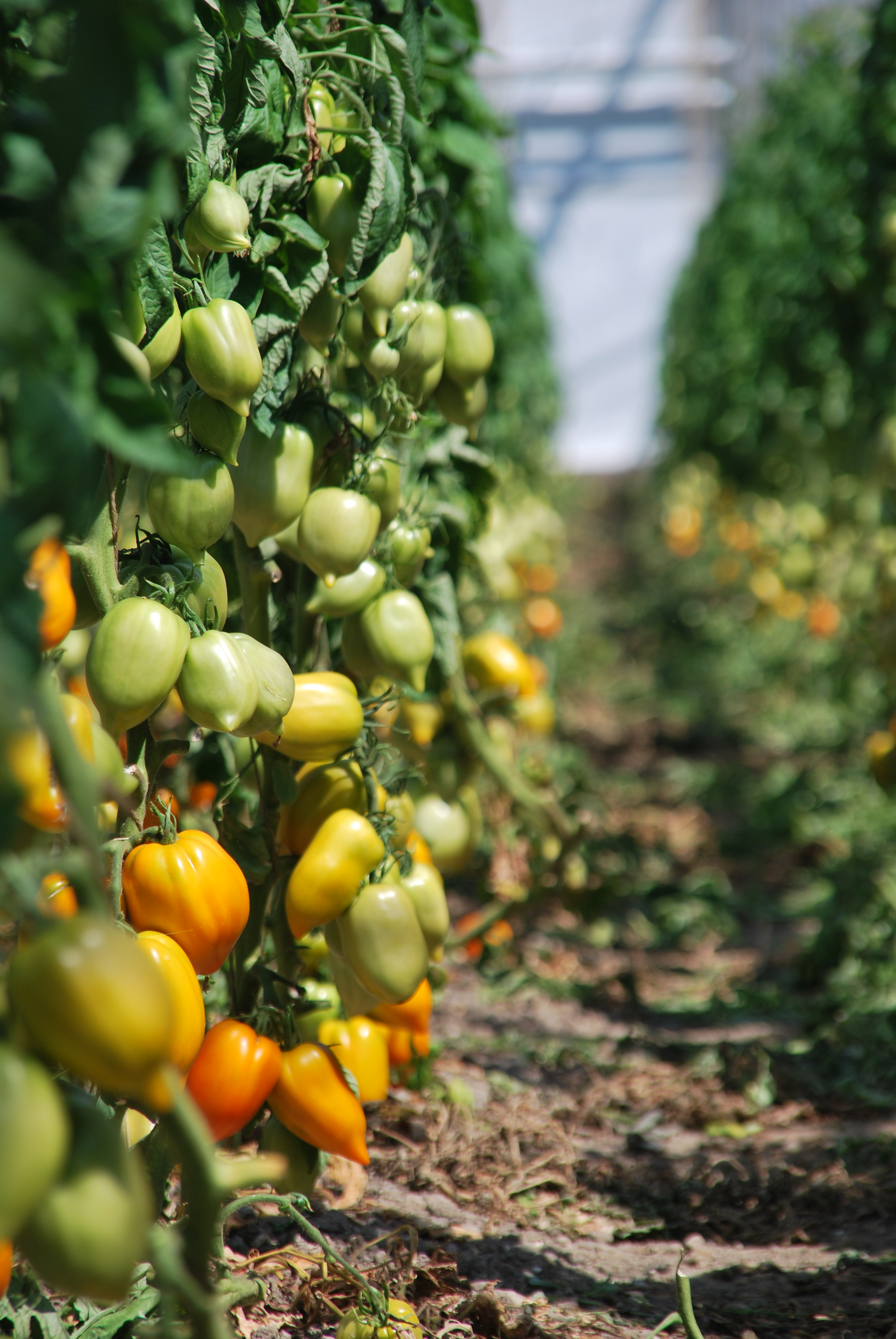 Quantify Planting for Food and Jobs Policy - SEND Ghana ...
